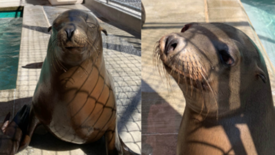 2 sea lions at the Brookfield Zoo in Chicago